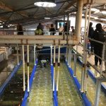 Tour to Pinnacles Lobster Farm