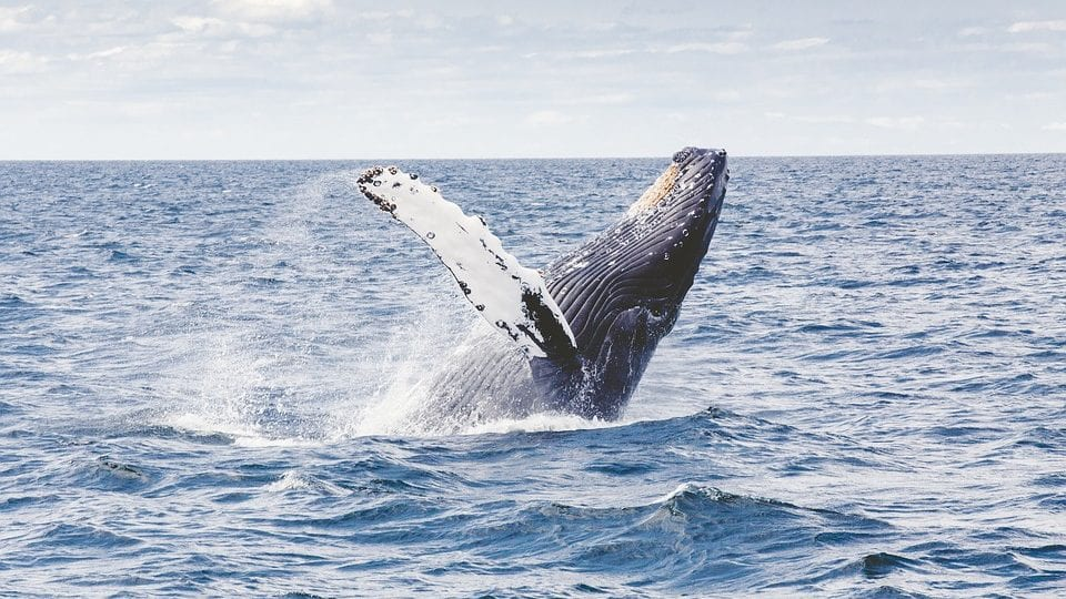 Whale Watching (NSW)